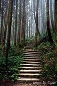 杉林溪森林遊樂區:17杉林溪.JPG