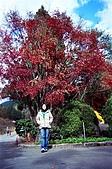 之前的照片:楓樹