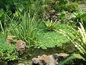 970809大板根森林遊樂區:水池