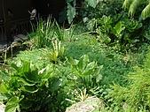 970809大板根森林遊樂區:植物長得很漂亮