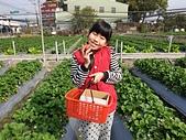109相簿:1090119採草莓_200119_0004.jpg