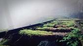 山與水:IMG_2729.JPG