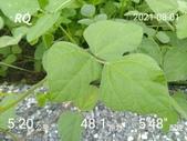 20210101_練跑紀錄照片:RQ_IMAGE_20210801_094544.jpg