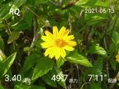 20210101_練跑紀錄照片:RQ_IMAGE_20210613_084717.jpg