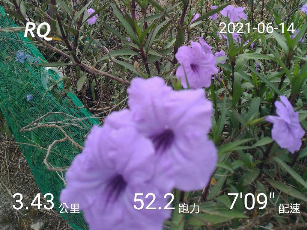 20210101_練跑紀錄照片:RQ_IMAGE_20210614_084526.jpg