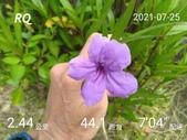 20210101_練跑紀錄照片:RQ_IMAGE_20210725_092555.jpg