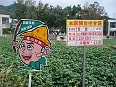 2009.08.15小妞_金山蕃薯節:P8153365.JPG