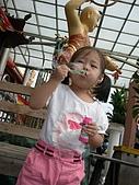 2009.08.15小妞_金山蕃薯節:P8153366.JPG