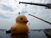黃色小鴨:黃色小鴨 035.jpg
