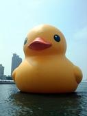 黃色小鴨:黃色小鴨 008.jpg