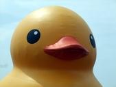 黃色小鴨:黃色小鴨 024.jpg