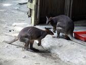 壽山動物園:1042689176.jpg