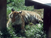 壽山動物園:1042689177.jpg