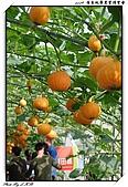 2009 屏東熱帶農業博覽會:DSC_0341.jpg
