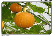 2009 屏東熱帶農業博覽會:DSC_0347.jpg