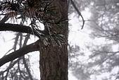 20091129 安徽池洲九華山地藏王菩薩朝聖4天之旅(早去午回))第二天:176 天然睡佛觀景平台