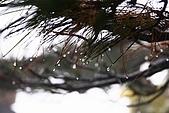20091129 安徽池洲九華山地藏王菩薩朝聖4天之旅(早去午回))第二天:178 天然睡佛觀景平台