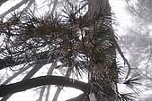20091129 安徽池洲九華山地藏王菩薩朝聖4天之旅(早去午回))第二天:179 天然睡佛觀景平台