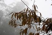 20091129 安徽池洲九華山地藏王菩薩朝聖4天之旅(早去午回))第二天:151 飛來觀音峰