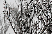 2010-01-16 台北-大屯山之雪豔:IMG_6481.jpg