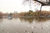 2013-01-17 雲南昆明-翠湖、陸軍講武堂:IMG_9021.jpg