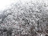 2008-03-07 峨嵋山(金頂):IMG_7188.JPG