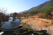 2013-01-20 雲南麗江-玉水寨:IMG_9766.jpg