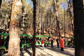 2013-01-21 雲南麗江-玉龍雪山、雲杉坪、藍月谷:IMG_0265.jpg