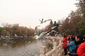 2013-01-17 雲南昆明-翠湖、陸軍講武堂:IMG_9023.jpg