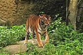 2010-10-24 台北市立動物園:IMG_1387.jpg