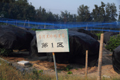 2011-08-25 福建東山-台灣黑珍珠:IMG_1323.jpg