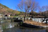 2013-01-20 雲南麗江-玉水寨:IMG_9752.jpg