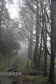 2010-12-04 太平山-山毛櫸步道:IMG_4227.jpg