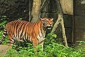 2010-10-24 台北市立動物園:IMG_1389.jpg