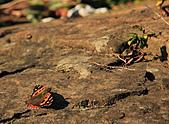 2010-12-27 台北-拇指山 九五峰(二次探勘):IMG_6185.jpg