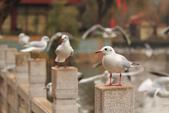 2013-01-17 雲南昆明-翠湖、陸軍講武堂:IMG_9026.jpg