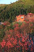 2010-12-06 太平山-太平山莊日出:IMG_4890.jpg