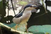 2013-06-30 台北市-大安中正紀念植物園:IMG_1736.jpg