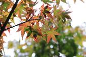 2011-10-08 梨山-福壽山:IMG_3567.jpg