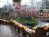2008-03-05 九寨天堂早晨雪:IMG_6739.JPG