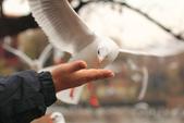 2013-01-17 雲南昆明-翠湖、陸軍講武堂:IMG_9027.jpg
