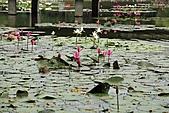 2010-10-22 台南成大:IMG_0869.jpg
