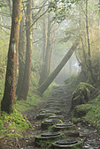 2010-12-04 太平山-山毛櫸步道:IMG_4234.jpg