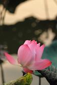 2013-06-30 台北市-大安中正紀念植物園:IMG_1742.jpg