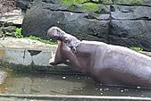 2010-10-24 台北市立動物園:IMG_1480.jpg