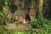 2010-10-24 台北市立動物園:IMG_1398.jpg