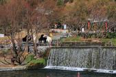 2013-01-20 雲南麗江-玉水寨:IMG_9768.jpg