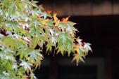 2011-10-08 梨山-福壽山:IMG_3571.jpg