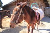2013-01-20 雲南麗江-玉柱擎天景區-->玉湖村納西古村落(騎馬):IMG_9903.jpg