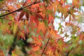 2011-10-08 梨山-福壽山:IMG_3573.jpg
